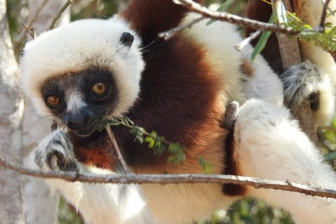 Madagascar – Sunrise with the lemurs