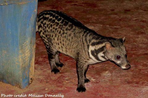 Indonesia – Midnight Picnic in the Pondok