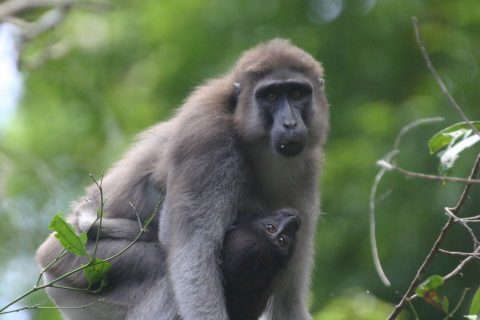 Indonesia – Seeing a family of Macaques