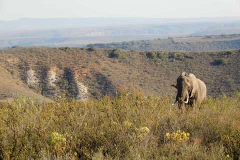 South Africa – day in the life of a Gondwana research assistant