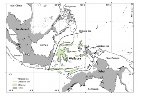 Why is the Wallacea region so biologically interesting?