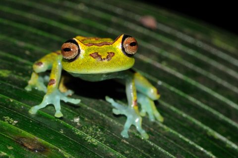 Brochure 2015 frog