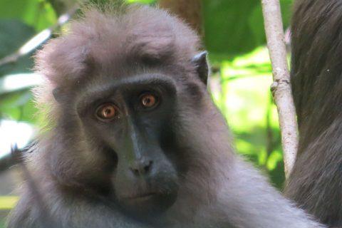Macaques – Labundo's best frenemy
