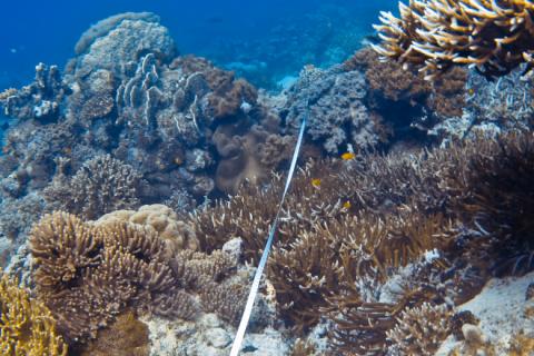 ReefMonitoring