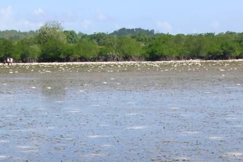 Seagrass-Mangrove