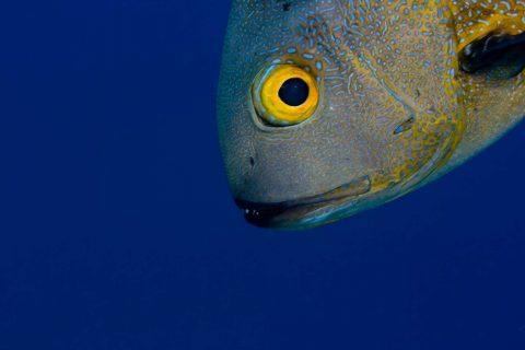 30 uni brochure 2016 Midnight snapper face in the blue Dr Dan Exton