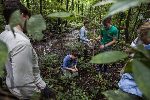 Science Snacks: Sleeping site fidelity in three neotropical species of herpetofauna