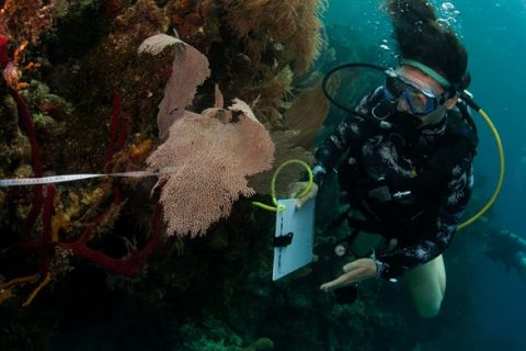 The Challenges of Collecting Data Underwater