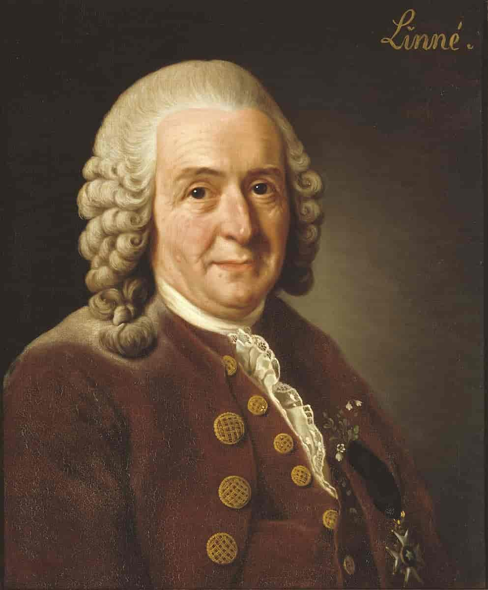 Carl Linnaeus, Father of Taxonomy, The Swedish Naturalist Carl von Linné (Linnaeus) – creator of the Linnaean system of species descriptions used by all taxonomists today.