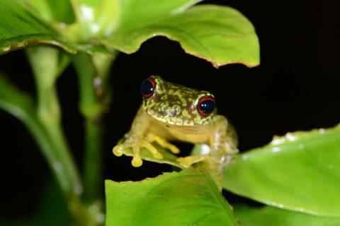 Science Snacks: Amphibian chytrid fungus in rainwater