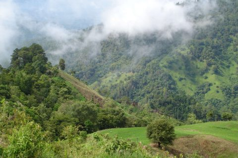 Science Snacks: Climate Change & the Bird Community of Cusuco National Park, Honduras