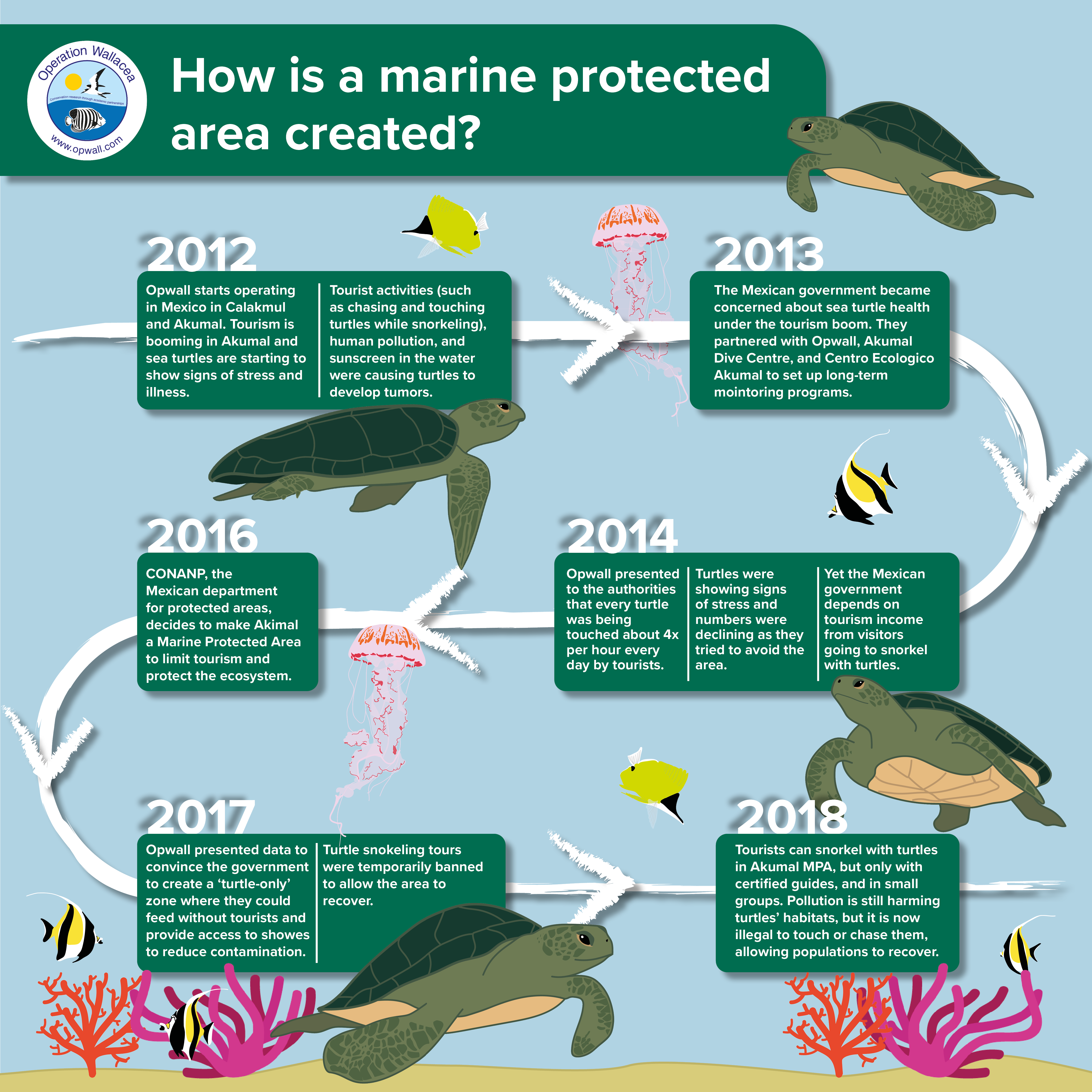 An infographic showing the timeline of how the Akumal Bay Marine Protected Area was created in Mexico. Operation Wallacea data on green sea turtle health was used to create the Marine Protected Area