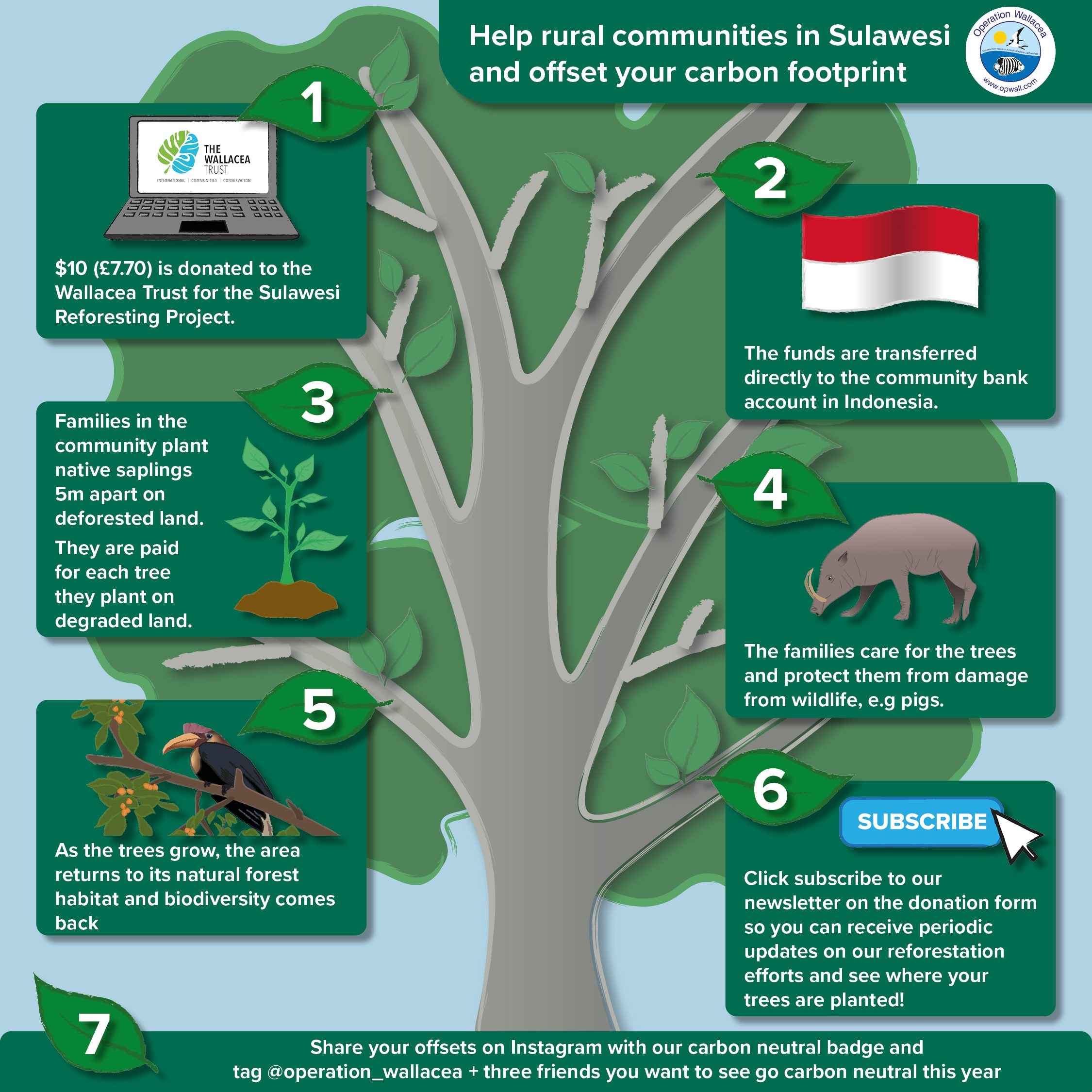 This infographic explains what happens to your funds when you donate to our reforestation project in Sulawesi to offset your individual carbon footprint. We break from traditional reforestation projects by showing you exactly where the trees are being planted, and by whom, as well as ensuring we are planting native species and giving them the best possible chance for survival.