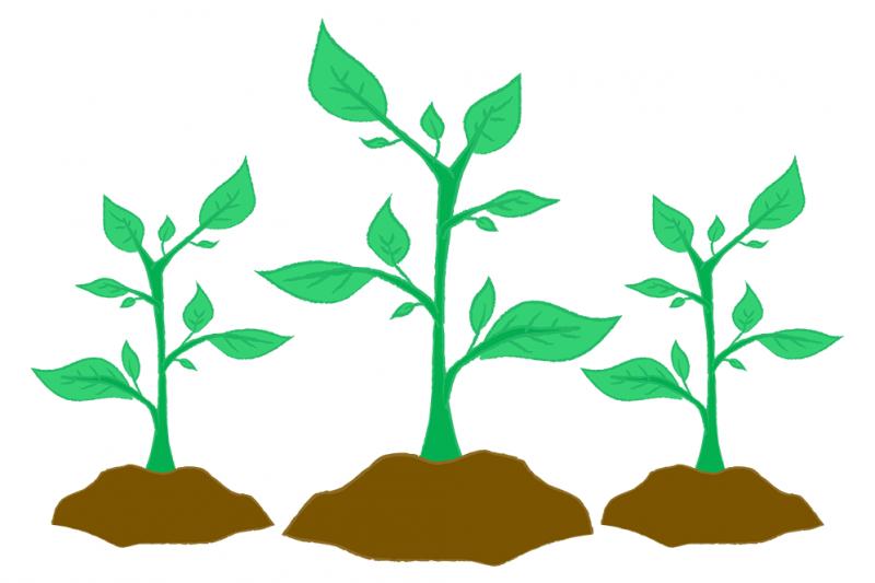 treesaplings