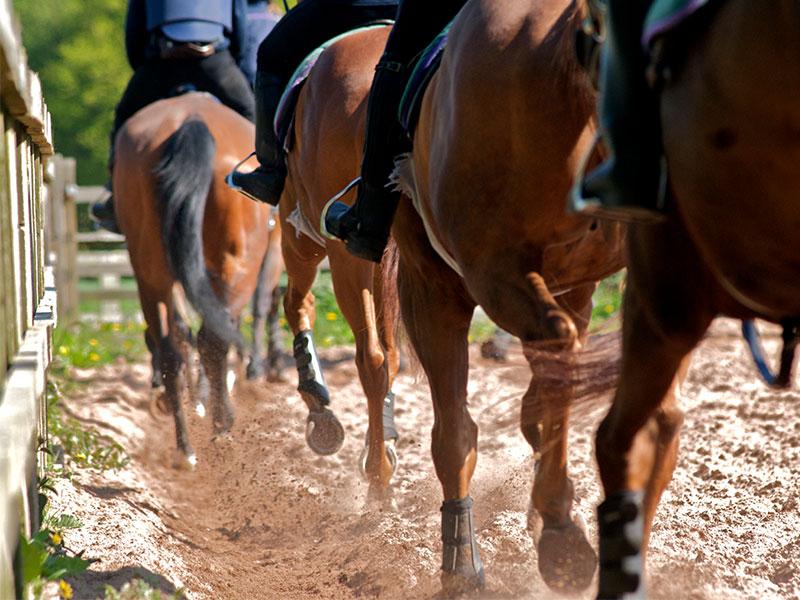 Racehorse Level 3 Apprenticeship