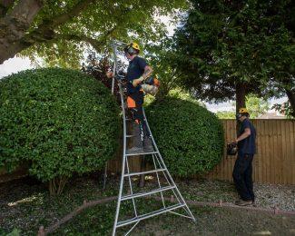 services-hedges