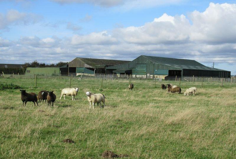 Ryedale Farm, Hale Lane, Frithville, Boston
