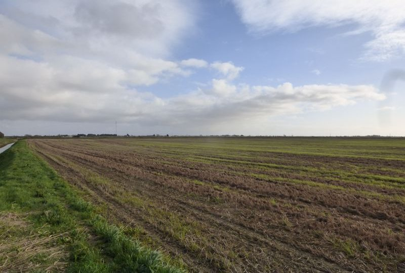 63.93 Acres of Productive Arable Land, Causeway Bank Lane, Maltby Le Marsh, Alford