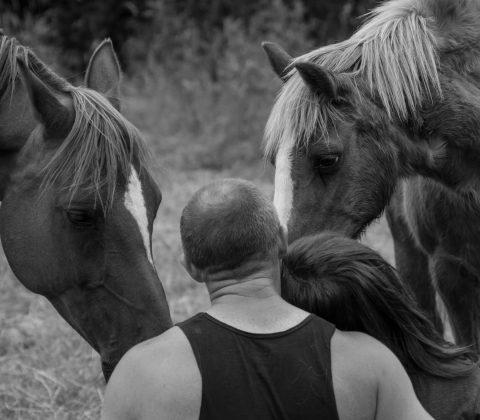 horseshoe-hearts-about